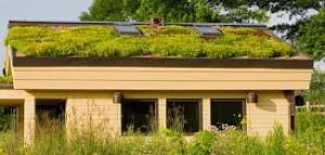 tetőkert növények