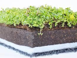 zöldtető rétegrend